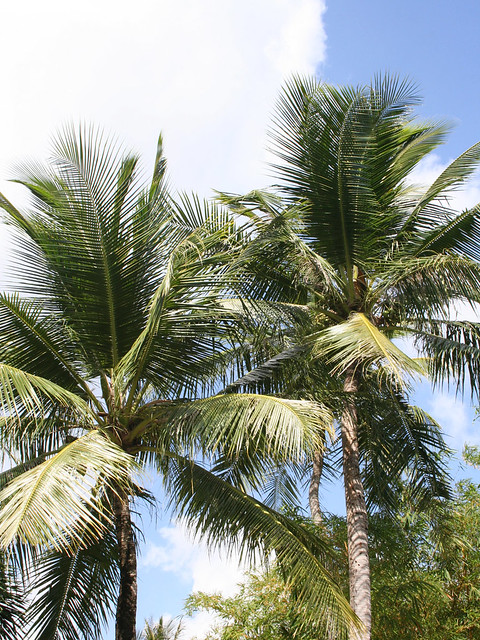 coconut tree uses its different parts