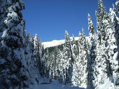 Lamon (Belluno) - Trees and snow