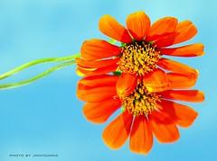 PARÁBOLA: A MAIS BELA FLOR (Parable : The Most Beautiful Flower)