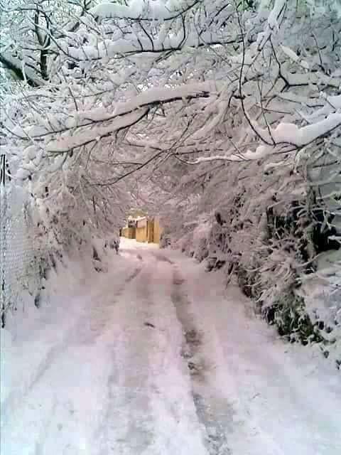 صور نادرة للطبيعة الجزائرية - صفحة 16 32723444672_c08c8a155b_b