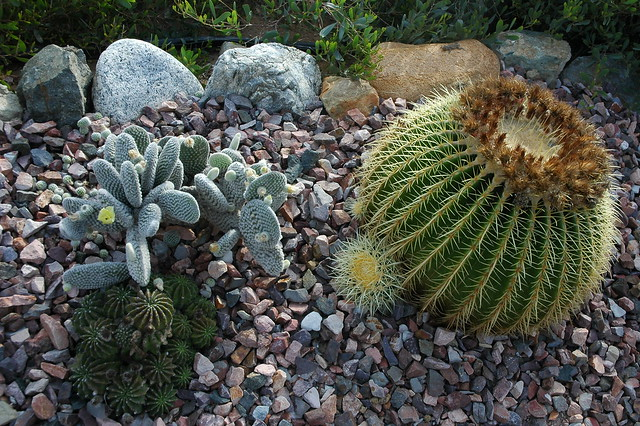 Three Kinds Of Cactus Planted In Stone Meditation Garden Self Realization Fellowship