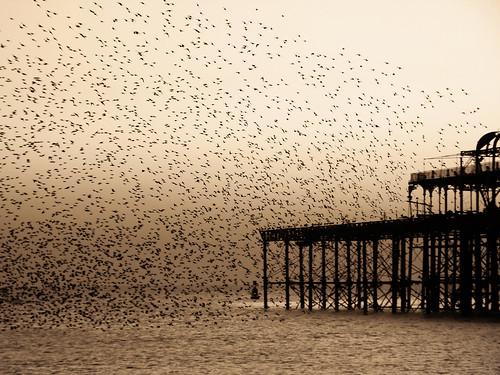 sea birds sepia sussex brighton dusk westpier valerie swarm starlings sigma18200mm june09 canoneos400d infinestyle pearceval 15challengeswinner