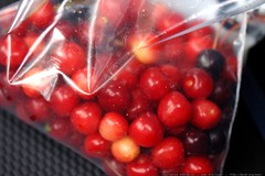 life is just a bag of cherries    MG 6214