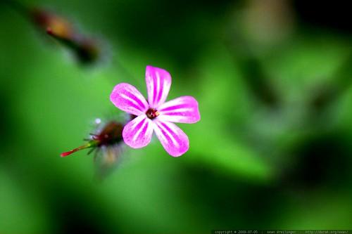 macro pink flower    MG 7291