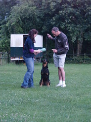 Great Canine Training Tips That Can Work For Your Dog! 2