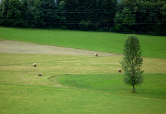 grass, golf course, meadow, lawn,