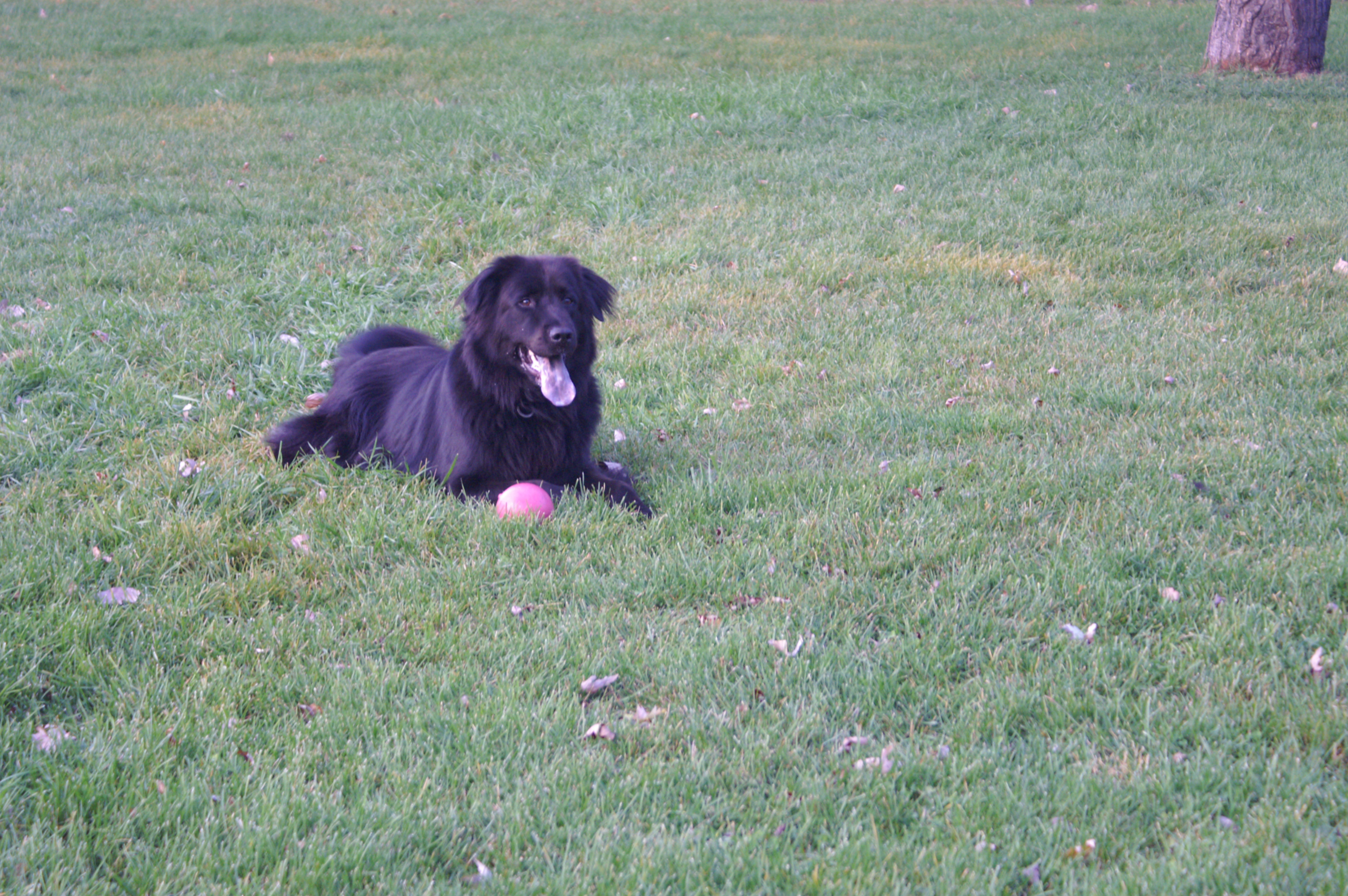 Our dog Lucas.