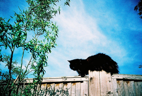 Oscar on the fence