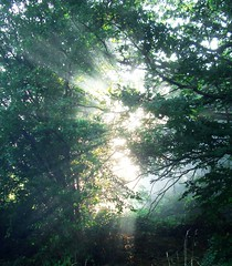 Rays of Sun Through Branches