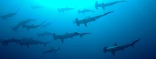 Sharks!@#U%$^%#$%^#