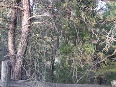 3 sixty 5 42: Weird branches