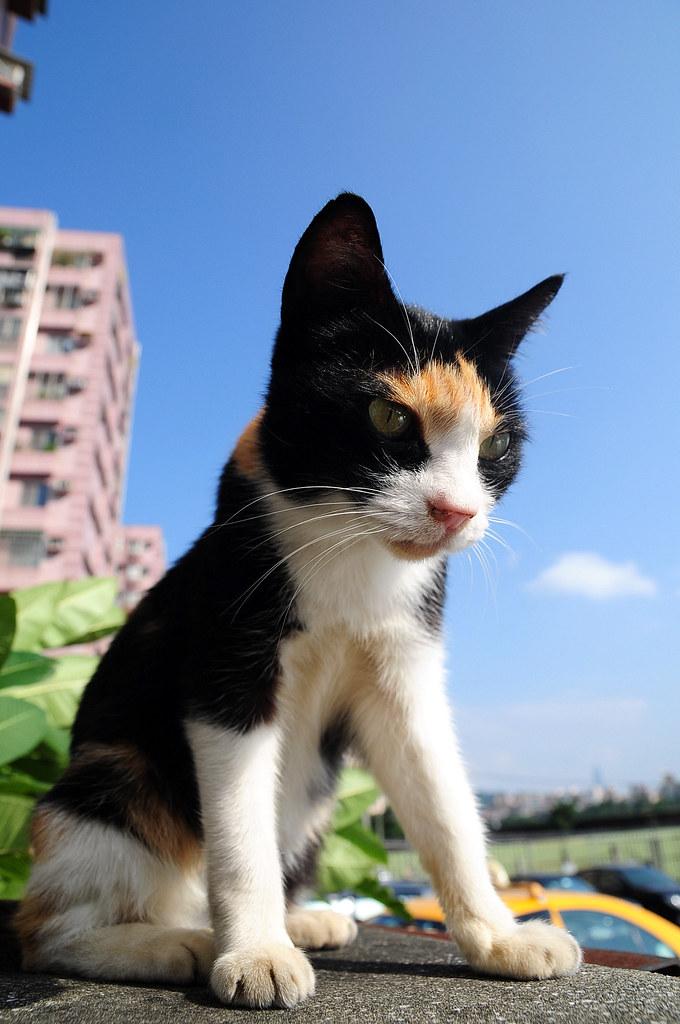 2009.10.29 巧遇小花貓