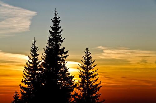 Sunrise Silhouette ~ Explored ~