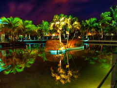 arecales, tropics, leaf, landscape lighting, tree, evening, light, green, reflection, night,