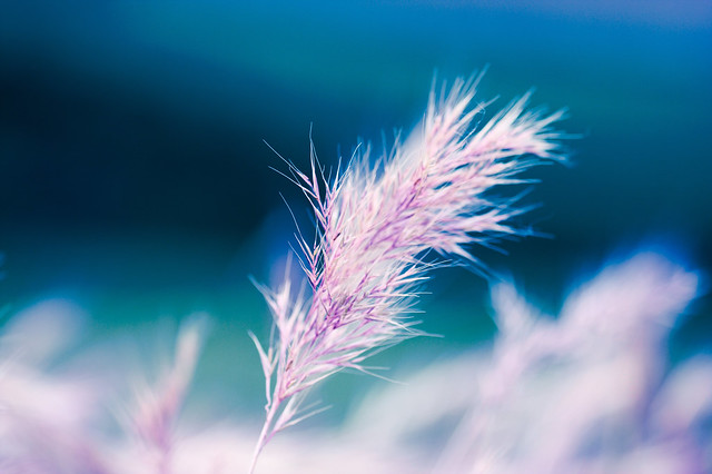 Color Blue: So Simple