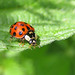 Lady Beetles - Photo (c) Cécile Bassaglia, some rights reserved (CC BY-NC-SA)