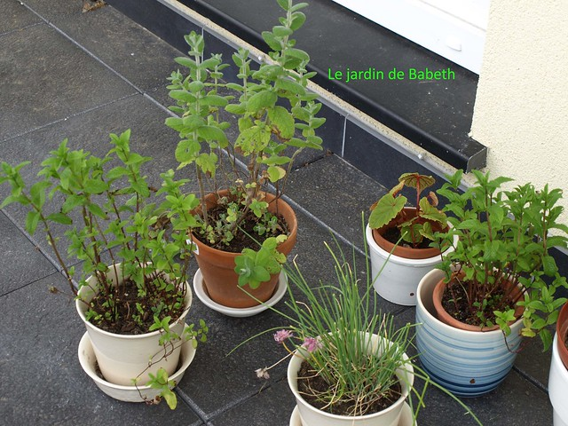 herbes aromatiques flickr photo sharing. Black Bedroom Furniture Sets. Home Design Ideas