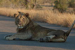 young male on the road