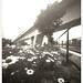 Daisy wheels under railway's bridge