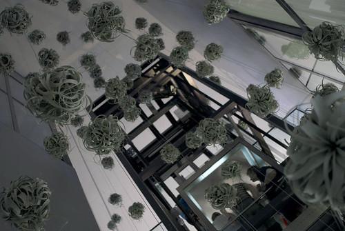 Jardines verticales monterrey instalaci n vegetal de for Instalacion de jardines verticales