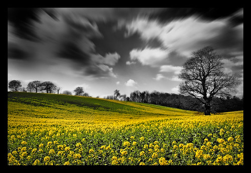 england black blur golden countryside britain rape mustard hertfordshire yellowtree bracey cotcmostfavorited rapefields bratanesque artofimages bestcapturesaoi andybracey