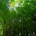 Small photo of La Foa - Oui Poin - Bambous
