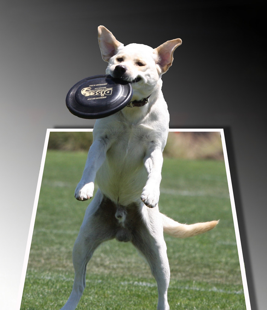 Floppy Eared Dog Ref Lineheart