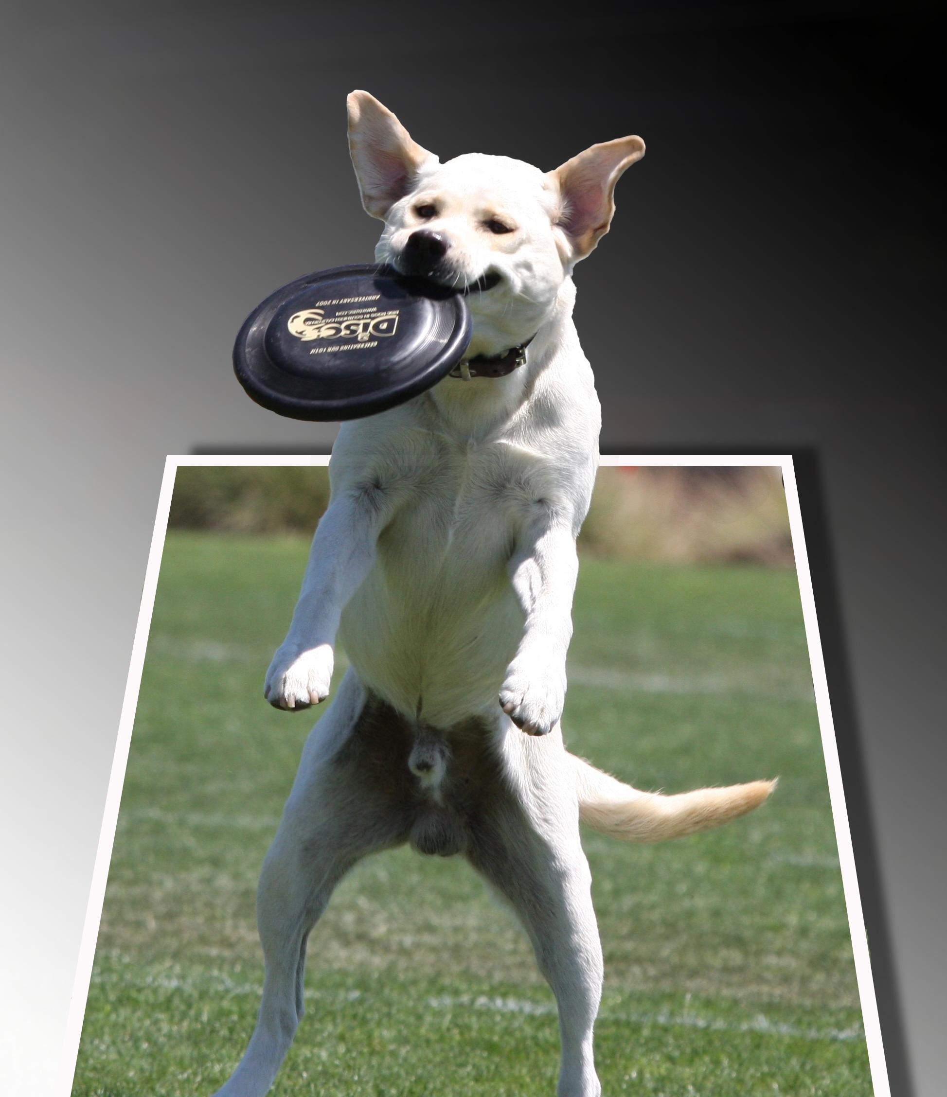 Floppy Eared Dog Lineartref