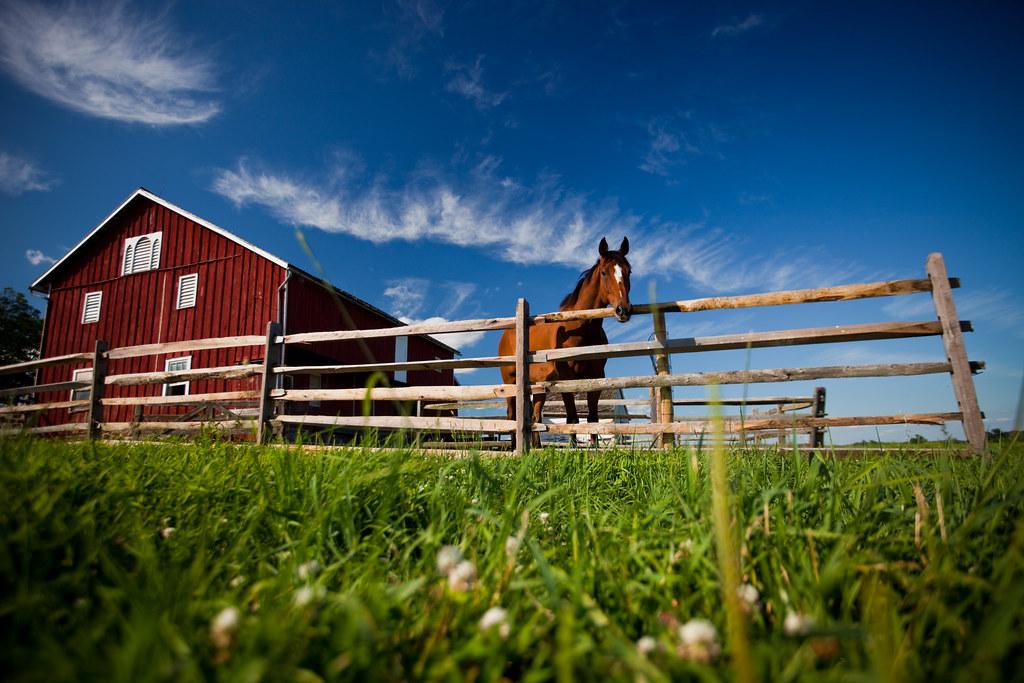 Picketts Horse (Gettysburg)