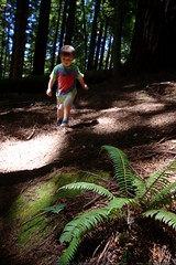 walking in the humboldt redwoods    MG 1139