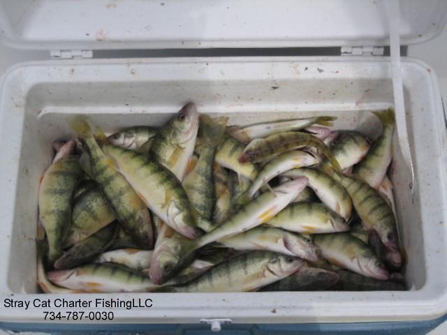 Lake Erie Michigan Perch Fishing Flickr Photo Sharing