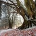 Winter Beech by angus clyne