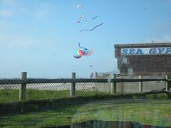 Gigantic kites in Lincoln City