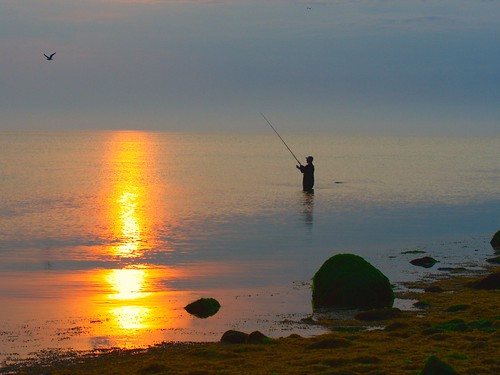 sea bird sunrise island fisherman long sound
