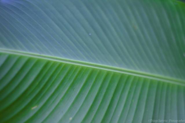 Textura Verde / Green Texture | Flickr - Photo Sharing!