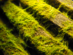 algae, seaweed, grass, sunlight, nature, macro photography, flora, green, close-up, green algae, moss,