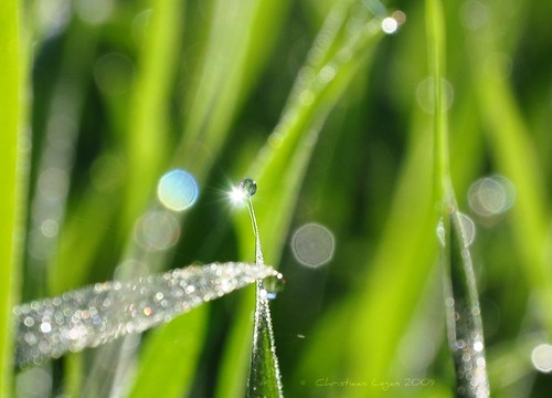 morning light sun sunlight green grass bokeh dewdrop explore dew blade hff 496 flarefridays 18july2009