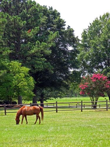 horses horse brown pasture equestrian