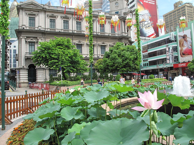Lotus flowers in front of Municipal office of Macao