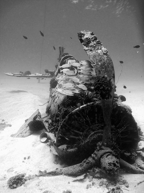 4032576893 e5bf934a65 z [Pics] Flickr Spotlight   Underwater Wrecks