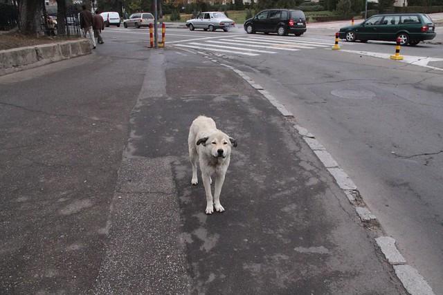 Sad stray dog | Flickr - Photo Sharing!