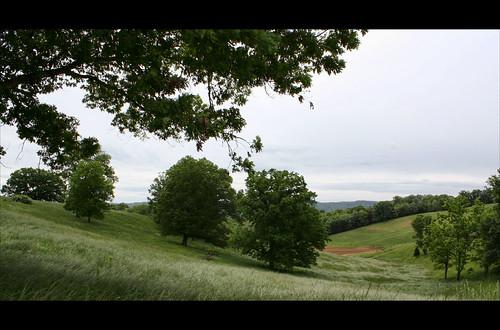 trees field landscape virginia explore leecounty