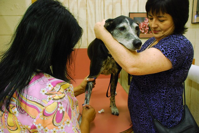 Dog Heartworm Test At Home