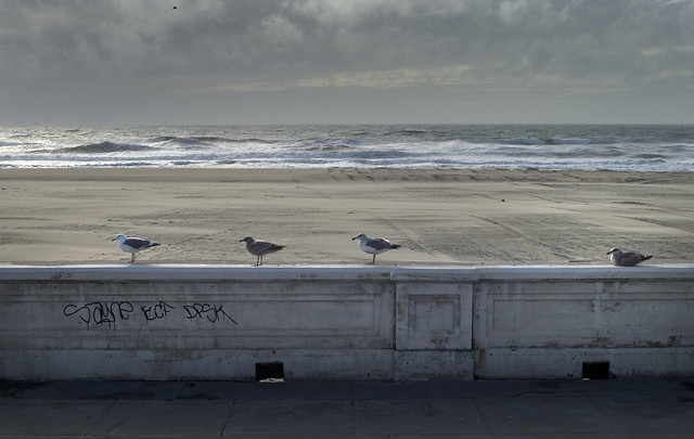 four seagulls during a windy day at ocean beach, san francisco