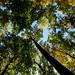 Highbanks - Autumn 2009