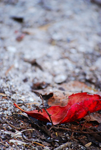 autumn photography leaf brooke worley