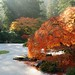 Japanese Garden  by photogitis