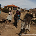 Donkeys On Their Way Home - Isla del Sol, Bolivia