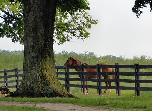 horse fence evening indiana driveway pasture equine washingtoncounty dschx1 sinkingspringsfarm