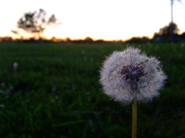 Summer evening | Flickr - Photo Sharing!